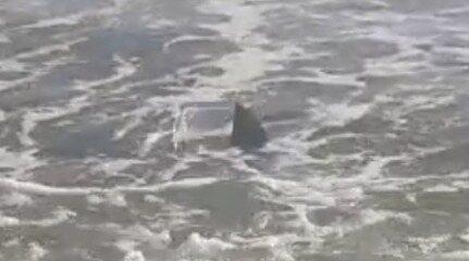 Turistas avistam tubarões no mar de Luís Correia, no litoral do Piauí