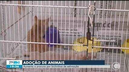 Crescem as adoções de pets durante a pandemia