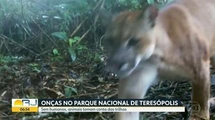 Duas onças apareceram no Parque Nacional da Serra dos Órgãos, em Teresópolis