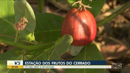 Caju abre a temporada da estação dos frutos do cerrado