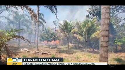 Área queimada este ano já ultrapassou superfície queimada em 2019