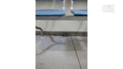 Rato é flagrado na UPA sul