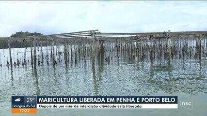 Cultivo de moluscos é liberado em Penha e Porto Belo após um mês de interdição