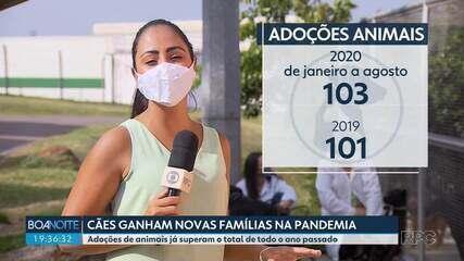 Aumenta o número de adoções de animais durante a pandemia