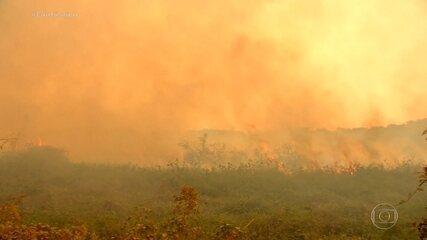No Pantanal, imagens mostram caminho do fogo e PF suspeita de ação criminosa em fazendas