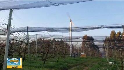 Leandro Puchalski fala sobre efeito da geada em pomares de maçãs
