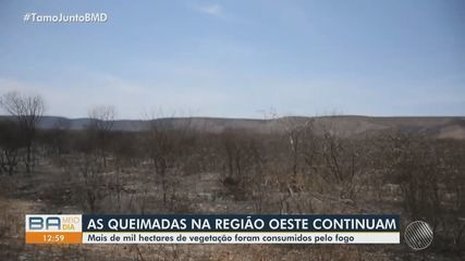 Tragédia ambiental: Queimadas espalham rastro de destruição no oeste da Bahia.