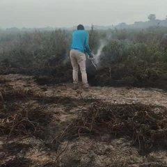 Bióloga trabalha como voluntária em ações no Pantanal durante queimadas