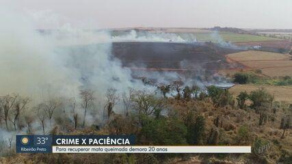 Moradores pedem reflorestamento de área queimada na zona Sul de Ribeirão Preto
