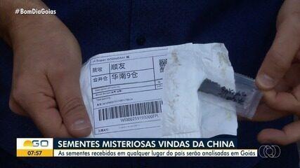Sementes 'misteriosas' que teriam vindo da China serão analisadas em Goiás