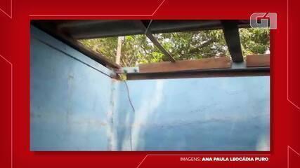 Temporal destrói estrutura de abrigo de animais em Martinópolis