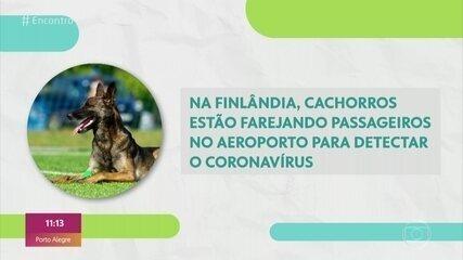 Finlândia usa cachorros em aeroporto para detectar o coronavírus