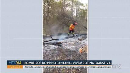 Bombeiros do Paraná enfrentam rotina exaustiva no Pantanal