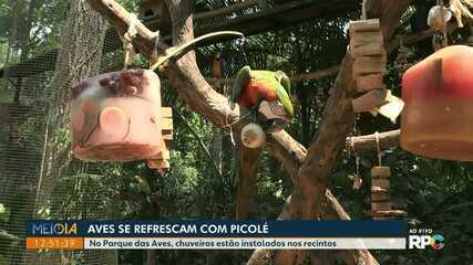 Aves se refrescam com picolé em Foz do Iguaçu