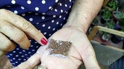 Fungos e bactérias são encontrados em sementes misteriosas que chegam da Ásia