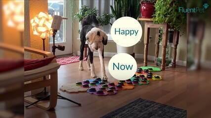 Empresa americana cria aparelho para permitir que cachorro 'fale' com seu dono
