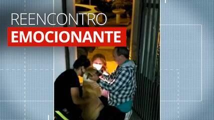 Veja o reencontro emocionante entre cão furtado há um ano e sua família