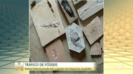 Polícia Federal prende três por tráfico de fósseis