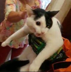 Bombeiros resgatam gatinha que ficou presa por 5 horas dentro de banheiro em BH