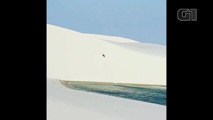 Felino selvagem é visto andando pelas dunas dos Lençóis Maranhneses