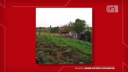 Roque Antônio dos Santos mostra sua produção de hortaliças