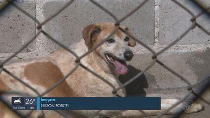 331 animais abandonados são resgatados em São Carlos em 9 meses