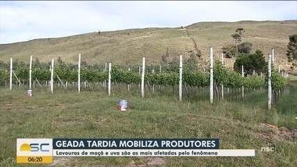 Geada tardia mobiliza produtores na Serra catarinense