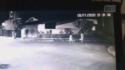 Câmera de monitoramento registra mulheres abandonando cadela amarrada em árvore