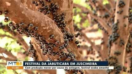 Festival da jabuticaba de Juscimeira é adiantado por questões climáticas