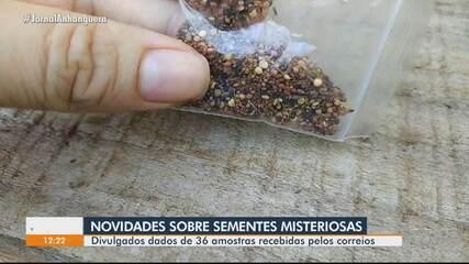Sementes vindas da Ásia apresentam altíssimo risco para agricultura brasileira, diz laudo