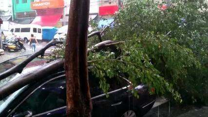 Queda de árvore em veículo na Rua Barão de Duprat, Centro SP