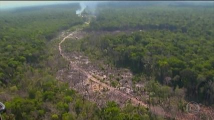 Desmatamento na Amazônia atingiu maior nível em 12 anos