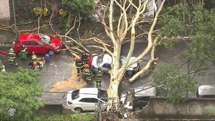 Temporais na cidade de São Paulo provocam a queda de 115 árvores e deixam uma vítima