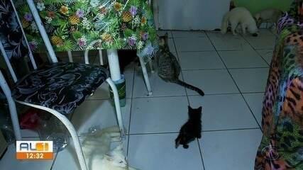 Idosa que se recupera de câncer precisa doar 20 gatos que resgatou das ruas de Maceió