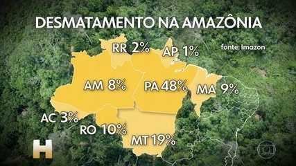 Desmatamento na Amazônia: área derrubada é a maior em 10 anos para meses de novembro