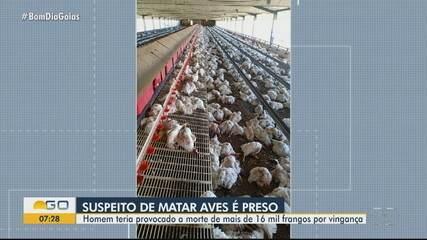 Homem é suspeito de provocar morte de mais de 16 mil galinhas por vingança