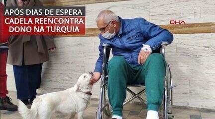 VÍDEO: veja reencontro da cadelinha que esperou dono na porta do hospital na Turquia