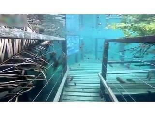 Cheia em rio de água cristalina se repete e trilha submersa 'bomba' na internet.