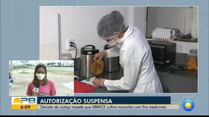 Decisão judicial suspende direito da ABRACE de cultivar maconha para fins medicinais