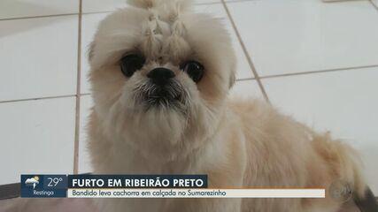 Ladrão furta cachorra no bairro Sumarezinho em Ribeirão Preto, SP