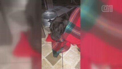 Cadela foi resgatada após ser jogada no lixo, em Praia Grande, SP
