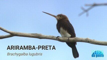 Veja vídeos da ariramba-preta, espécie de ave que perfurou o motociclista