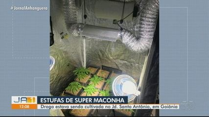 Polícia apreende estufas de super maconha cultivadas em Goiânia