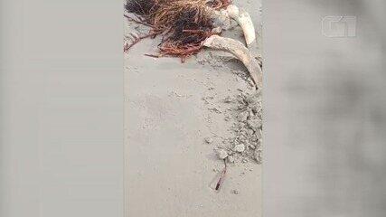 Esqueleto gigante desaparece de praia em Peruíbe, SP