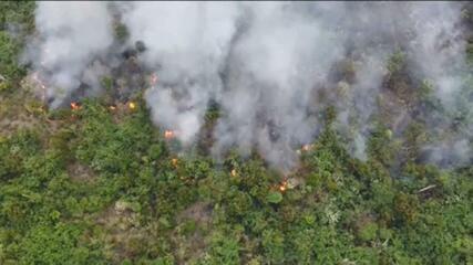 Imazon: devastação na Floresta Amazônica cresce 51% em um ano e supera 8 mil km²