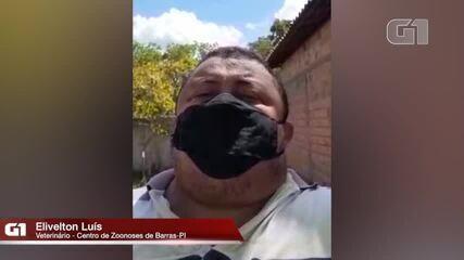 Veterinário responsável pelo Centro de Zoonoses de Barras fala sobre execução de cachorros. Reprodução: Barras é Notícia