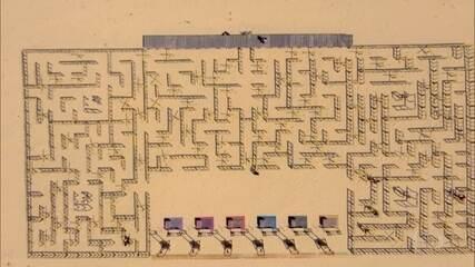 Participantes encaram labirinto no primeiro desafio da noite