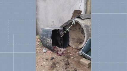 Cães em situação de maus-tratos foram resgatados em Viana