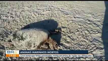 Cinco tartarugas marinhas são encontradas mortas em praias da região sul do estado