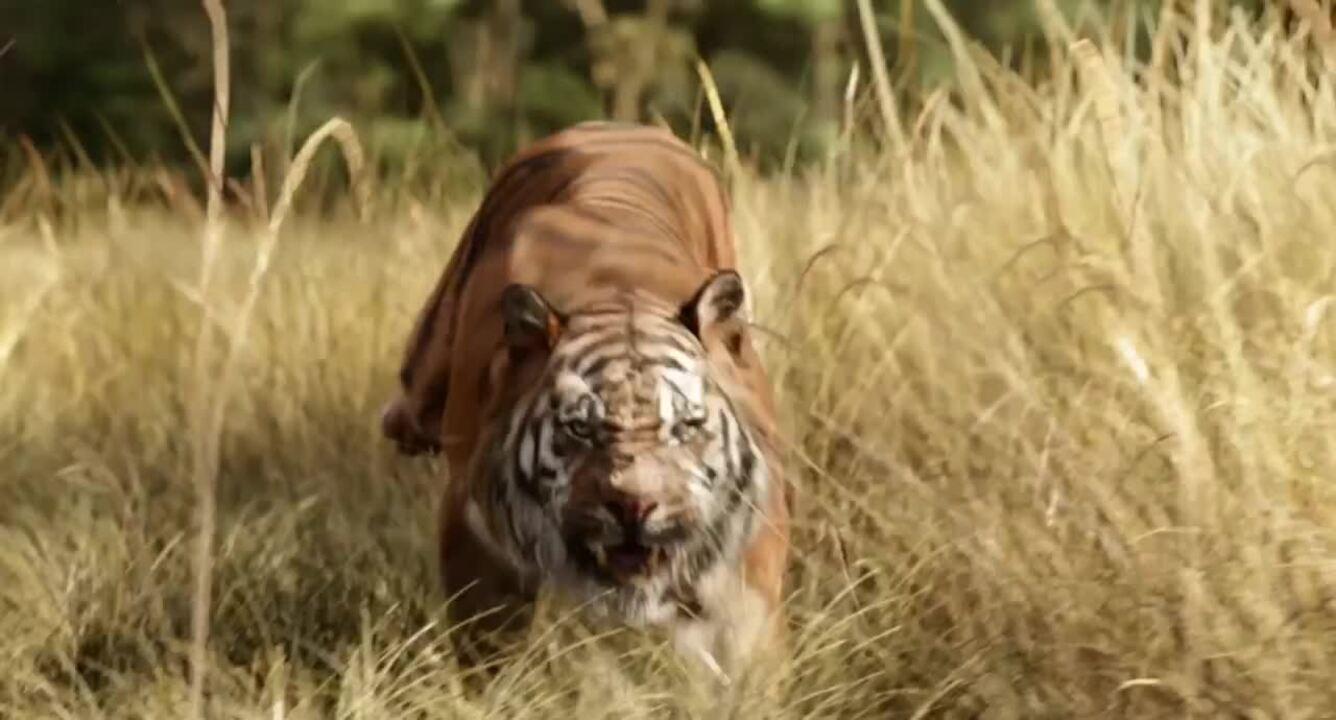 Assista ao trailer de 'Mogli: O menino lobo
